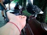 Донецкие голуби доверчивые почти как в Венеции ))